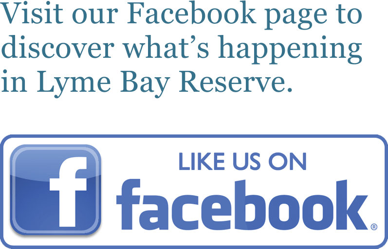 Visit our Facebook page to discover what's happening in Lyme Bay Reserve.